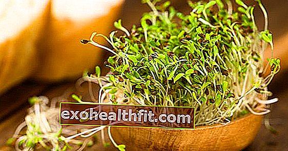 Il germoglio di erba medica fa bene alla pelle e disintossica il corpo! Scopri altri vantaggi