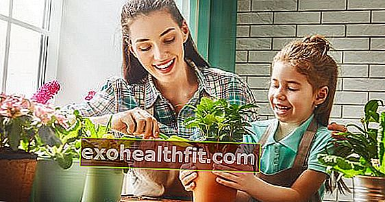 Ketahui mengapa merawat tanaman adalah terapi dan baik untuk kesejahteraan anda